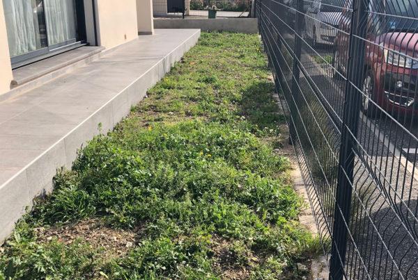 allée d'herbe dans le jardin