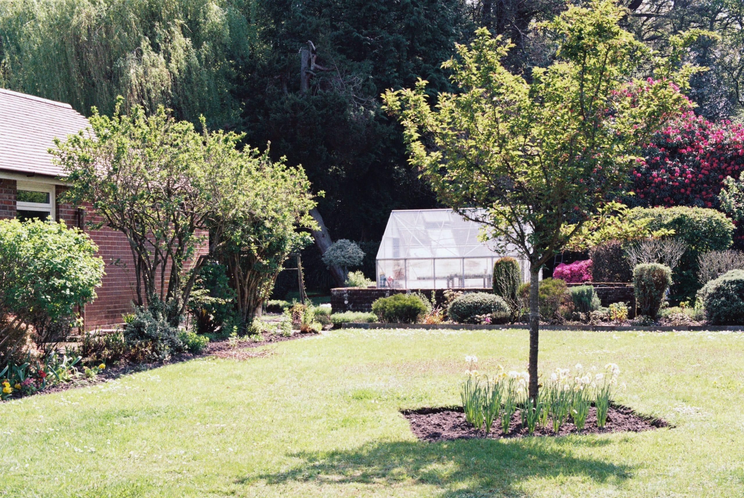 jardin avec des arbres et une cabane